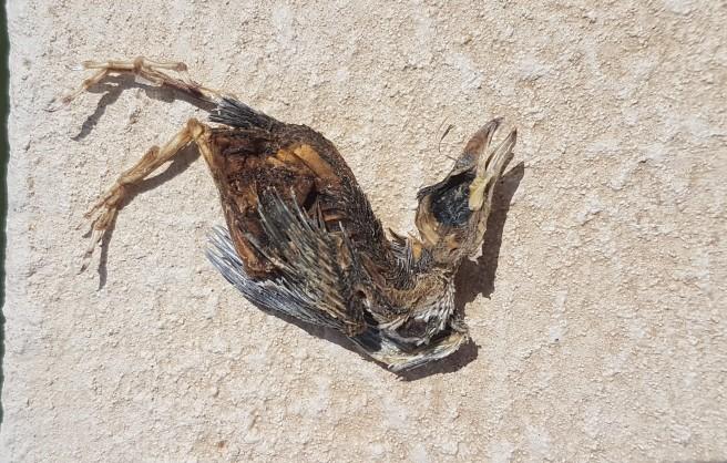 bird, dead